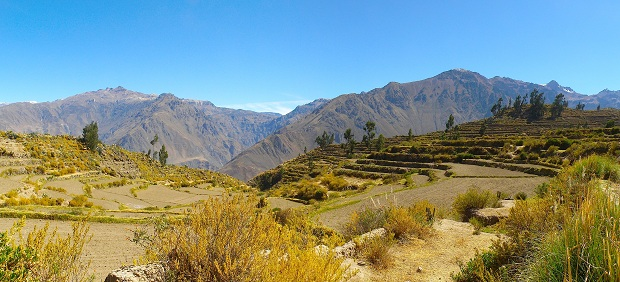 Terraces in Colca Canyon