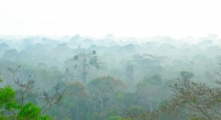Early Morning in the Amazon Basin